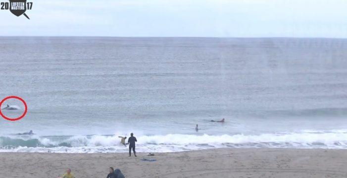 Presunto ataque de ballenas asesinas paraliza torneo de surf más frio del mundo