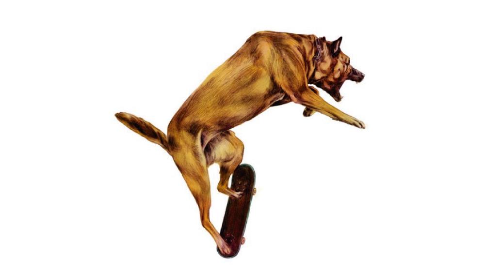 """[Video] Perro es atrapado con su skate tratando de hacer un """"Ollie"""""""