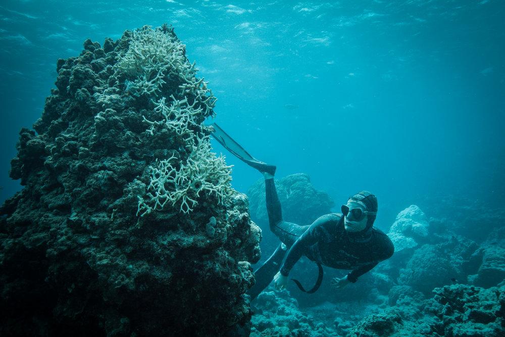 Azul: Documental sobre los oceános que no puedes dejar de ver llega a Perú