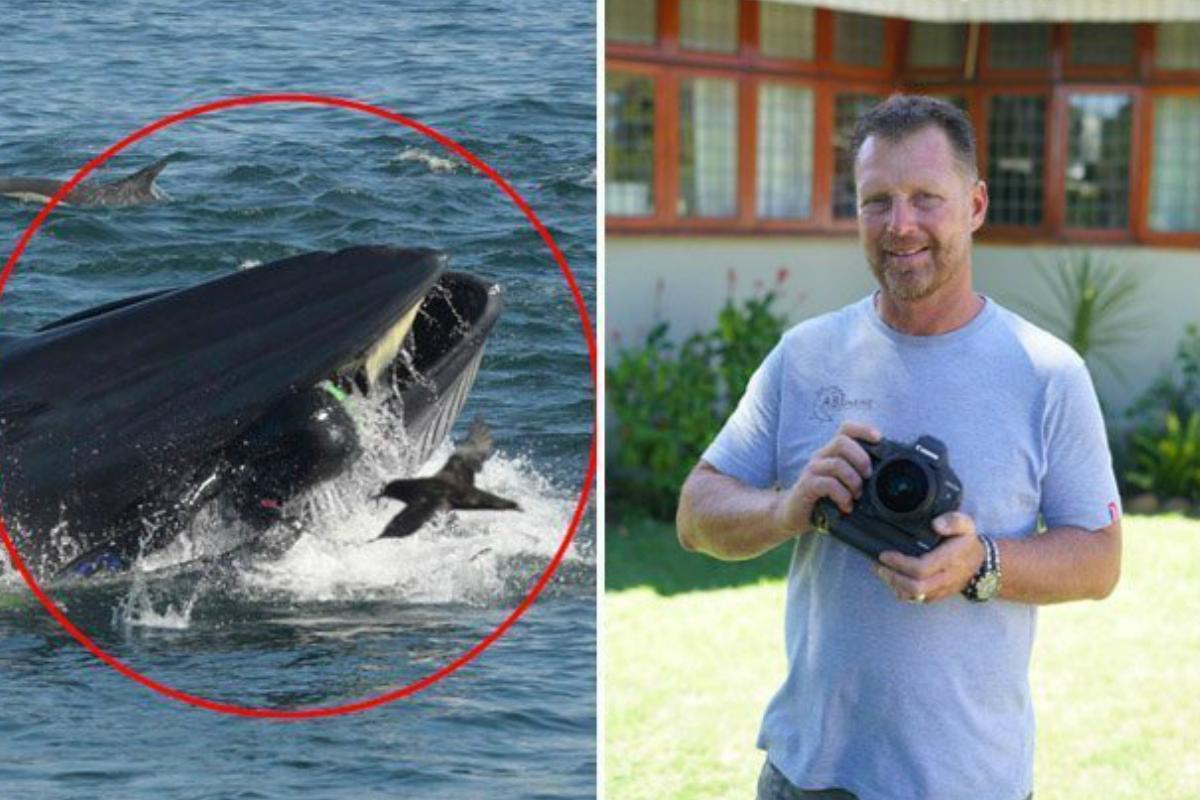 Ballena engulle a fotógrafo y lo expulsa vivo en una playa