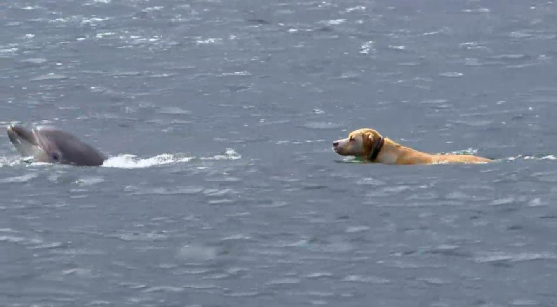 La increíble historia del perro que se hizo amigo de un delfín