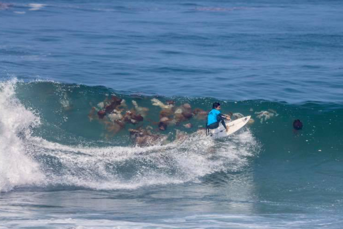 Reportan miles de malaguas en playas del sur de Lima