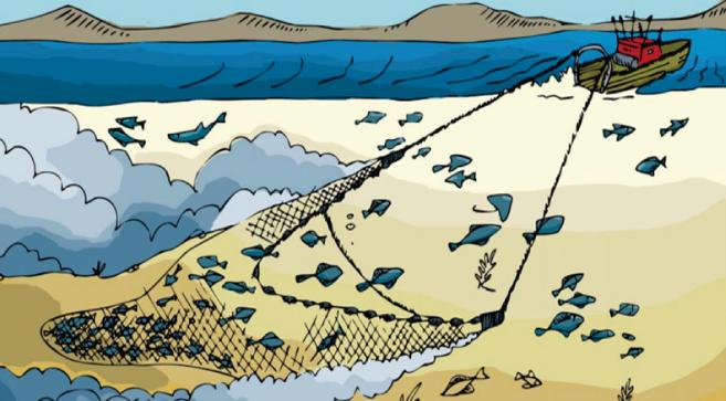Las terribles consecuencias de la pesca de arrastre
