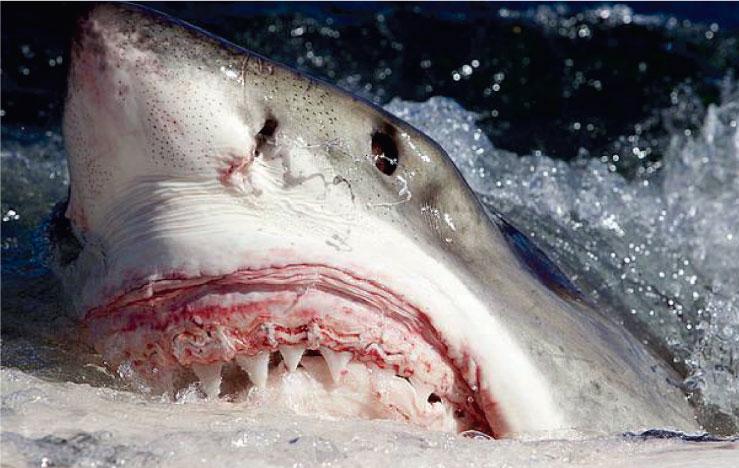 La importancia de los tiburones en el ecosistema marino