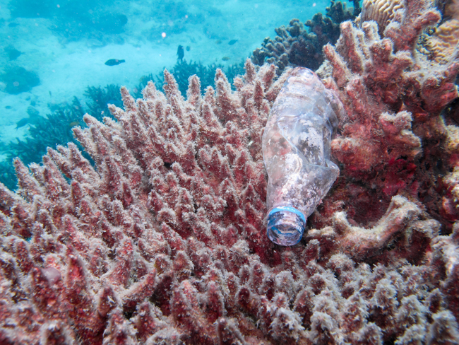Alerta Mundial: Los peces reemplazan el plancton por el plástico