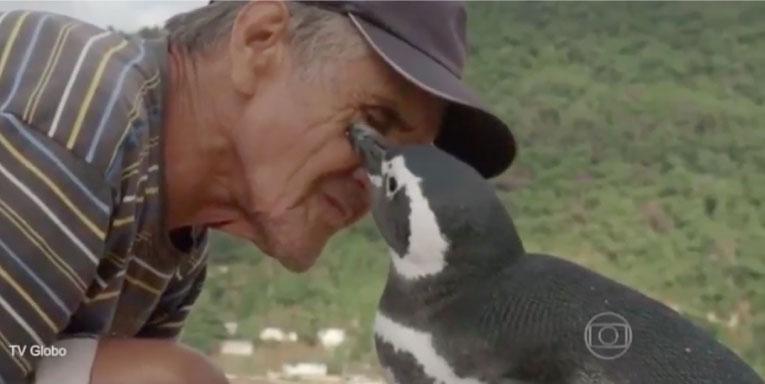 Dindim, el pingüino que todos los años nada 8000 km para reencontrarse con el hombre que le salvó la vida