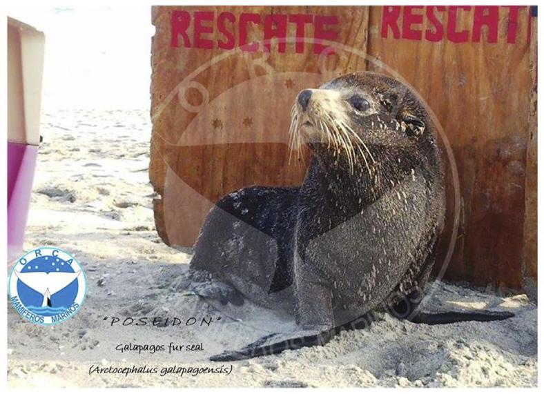 POSEIDÓN, el lobo marino que afecta la especie humana