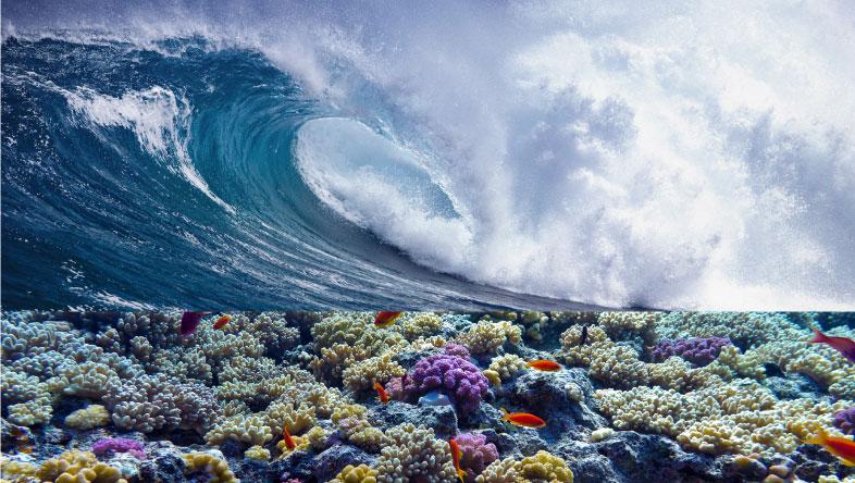 ¿Sabías que los océanos contribuyen a combatir el cambio climático?