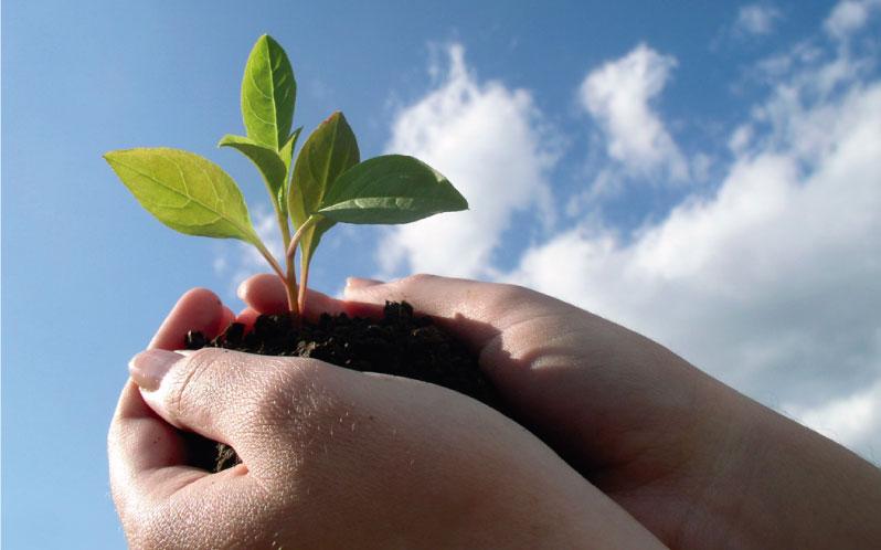 5 buenas razones por la que deberíamos consumir productos orgánicos