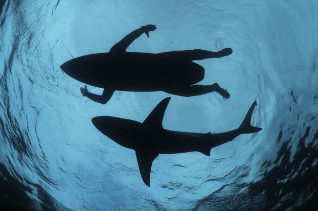 Hay tiburones en el Perú?, Cuál es la probabilidad de ser atacado por uno?