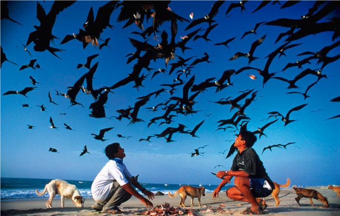Firma aquí y pídele a presidente Ollanta Humala establecer la zona reservada Mar Pacifico Tropical
