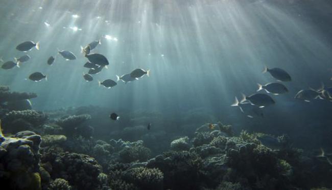 Impresionante y misterioso: los sonidos del Océano