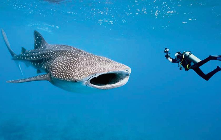 En Máncora pescador atrapa a tiburón y luego lo libera