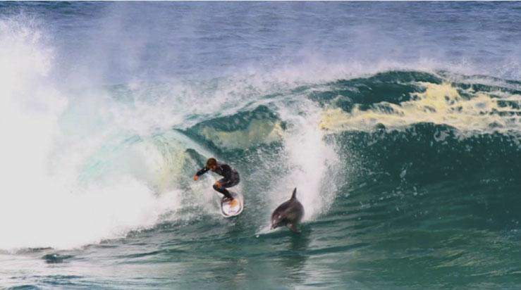 Una cosa es que te lancee un tablista, pero ¿qué cuando te lancea un delfín?