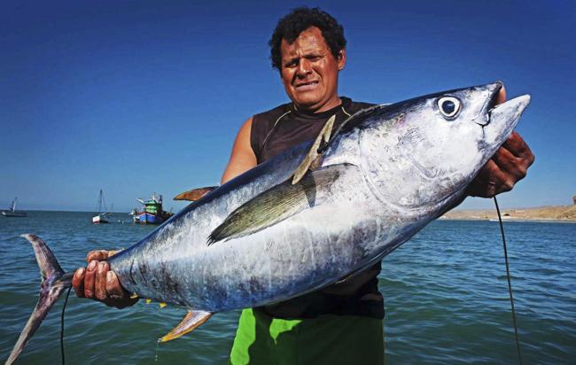 Creación del Mar Pacífico Tropical no frenará con la pesca ilegal